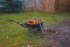Wheelbarrow, rake and leaves Royalty Free Stock Photo