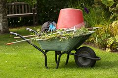 Wheelbarrow with rakes. A bucket and garden waste Stock Images