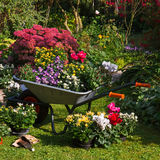 Wheelbarrow and trays with new plants Royalty Free Stock Image