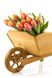Wheelbarrow with tulips Stock Images