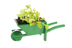 Wheelbarrow with vegetable plants Stock Photos