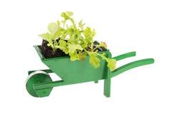 Wheelbarrow with vegetable plants Stock Photos