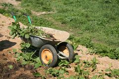 Wheelbarrow with weeds Royalty Free Stock Photography