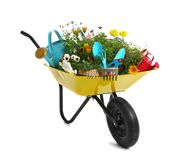 Free Wheelbarrow With Flowers And Gardening Tools Isolated On Royalty Free Stock Images - 154735879