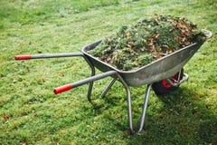 Wheelbarrow z trawą na zielonym gazonu tle Zdjęcie Royalty Free
