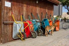 Wheelbarrows Colorfull και ένα σκυλί στοκ φωτογραφίες