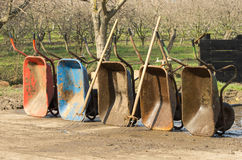 Wheelbarrows with dung forks Royalty Free Stock Photo