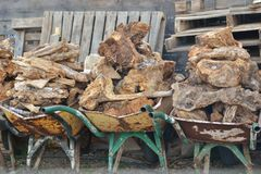 Wheelbarrows loaded with wood. A row of old wheelbarrows loaded with wood Royalty Free Stock Images
