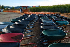 Wheelbarrows at pumpkin patch. Kent, WA, USA October 2, 2016: Rows of wheel barrows waiting for customers to use them to haul their chosen pumpkins from the Stock Photo