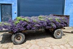 Wheelcart de style ancien avec des bouquets de lavande organique Photo libre de droits