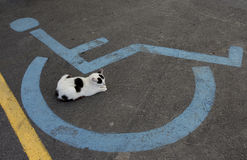 Wheelchair Handicap Sign and sleeping cat Royalty Free Stock Photo