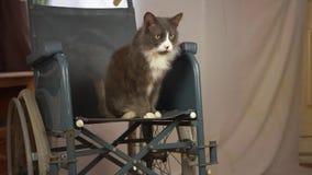 Wheelchair users pet cat in wheelchair