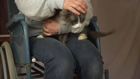Wheelchair users stroking her pet cat