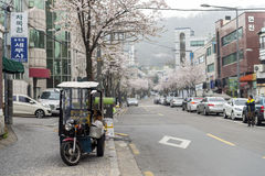 3-wheeler motorcycle with cherry flowers blossom on a common street at Seoul. Royalty Free Stock Image