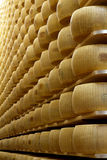Wheels of cheese on the racks Stock Photos