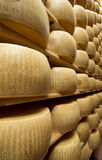 Wheels of cheese on the racks Stock Images