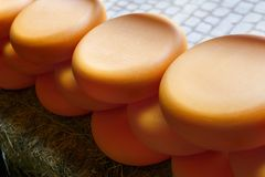 Wheels of cheese in a row outdoors Royalty Free Stock Images