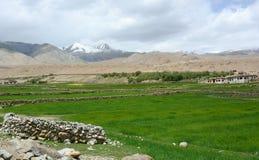 The wheet field and Tibetan village in Yunnan, China Stock Photo