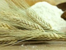 Wheet and flour Royalty Free Stock Image