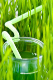 Wheet grass juice Stock Images