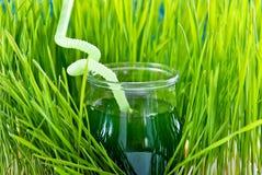 Wheet grass juice Stock Image