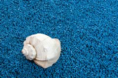Whelk  shell Royalty Free Stock Images
