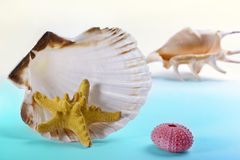 Whelk, starfish and sea-urchins Royalty Free Stock Image