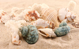 Whelks and corals Royalty Free Stock Photo