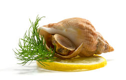 Whelks with dill and lemon Royalty Free Stock Images