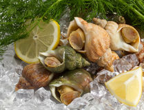 Whelks with dill and lemon Stock Photos