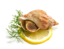 Whelks with dill and lemon Royalty Free Stock Photos