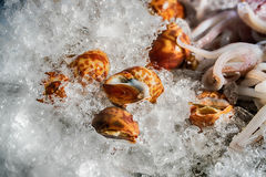 Whelks and fish on ice. royalty free stock photo