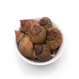 Whelks isolated on a white studio background. Stock Photography