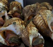 Whelks For Sale At Market In Faro Portugal. Whelks or large snails ice for sale at indoor market in Faro Algarve region Portugal Stock Photos