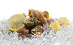 Whelks with lemon Stock Photos