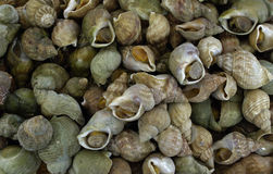 Whelks at the market Royalty Free Stock Images