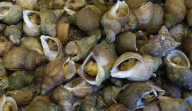 Whelks at the market Royalty Free Stock Photo