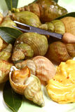 Whelks Or Sea Snails, Seafood Stock Photos