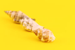 Whelks  on yellow Stock Images