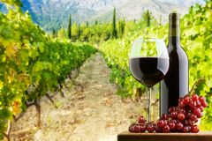 Where the best wine is done Royalty Free Stock Photos