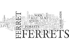 Where Do Ferrets Live Word Cloud. WHERE DO FERRETS LIVE TEXT WORD CLOUD CONCEPT Stock Images