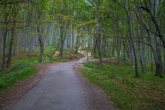Where do you want to go?. Very peaceful and a really fresh forest stock images