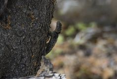 Camuflage of the lizard on tree stock image