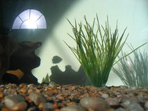 Where Have all the Fishes Gone?. The fish tank is empty, except for the shadow of one small fish Royalty Free Stock Image