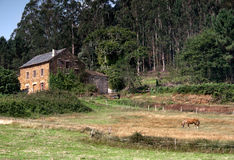Where the horses rests. A horse resting near a rustic house in Lugo, Galicia Stock Image