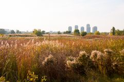 Where nature meets the city. Landscape of Vacaresti Nature Park and Skyscrapers from Bucharest city, the capital of Romania Stock Photo