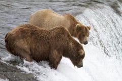 Where Are Those Salmon Stock Photo