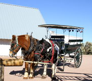 Horses and Old Tourist Carriage  Stock Photos