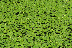 Where's Froggy? Stock Photography
