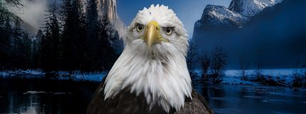 Wherever I may roam. Bald eagle close up in front mountains and lake Stock Image